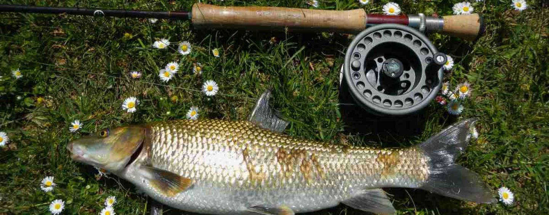 La pesca del barbo gitano se enamora de las moscas