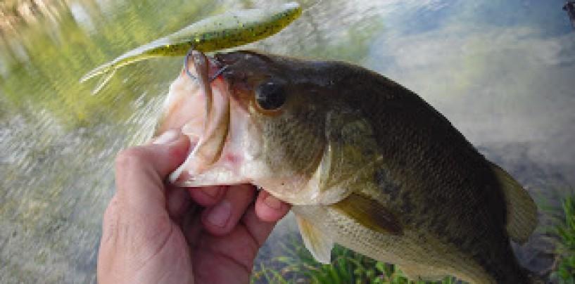5 cebos para la pesca del Black Bass en primavera
