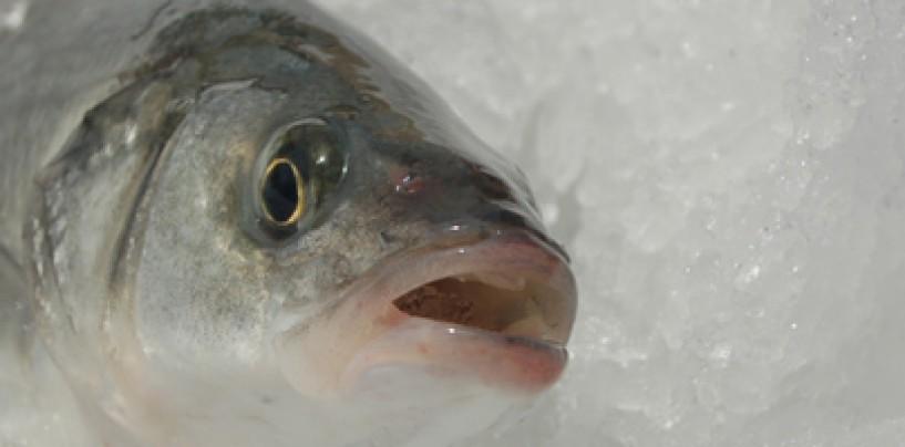 Receta de pescado: Lubina al albariño