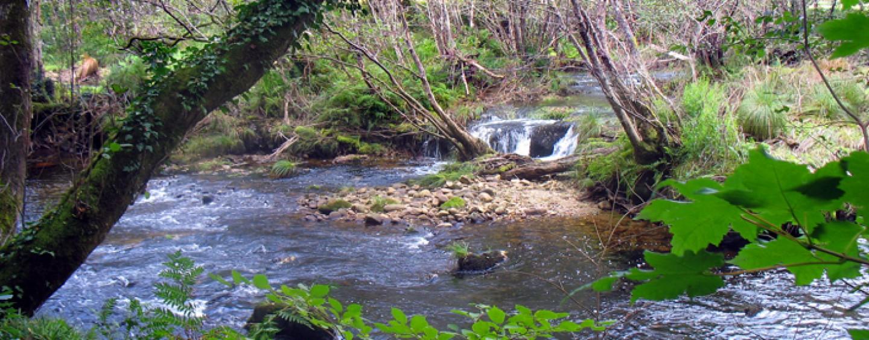 Río Lérez, un paraíso de truchas y naturaleza