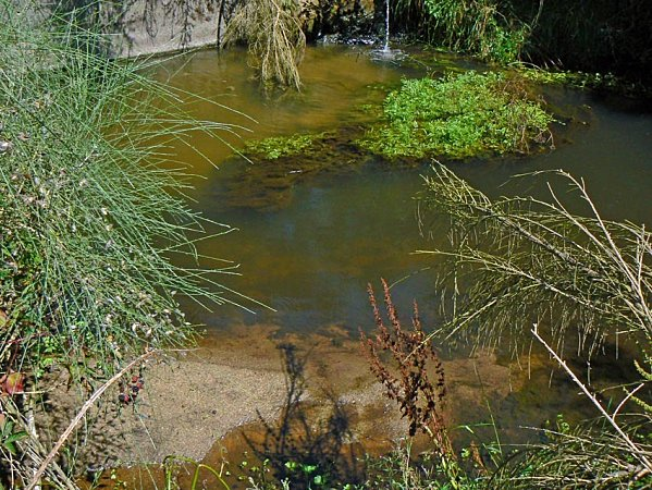 Restos de purín en el río Barberia. Foto del blog rioxallas.over-blog.es