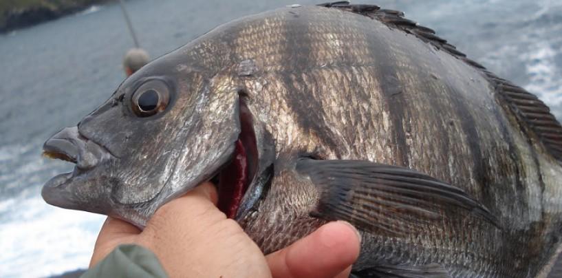 5 consejos para triunfar en la pesca del sargo