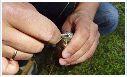 La mosca ideal para pesca de percasoles