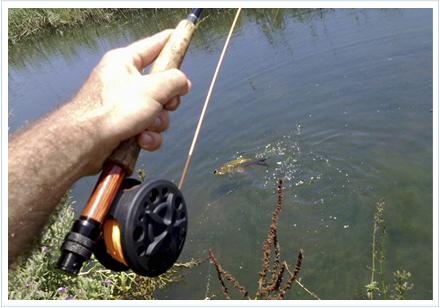 Pescando carpas con el carrete Okuma Airframe