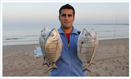 Grandes sargos capturados a surfcasting por Roque Navarro.