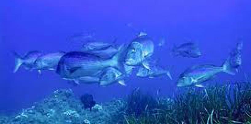 ¿Qué peces podemos pescar con profundizador?