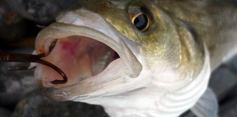 El anzuelo: la base del éxito en la pesca deportiva