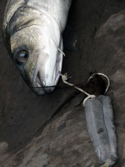 La importancia de un buen anzuelo en la pesca deportiva