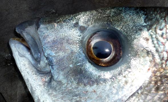 macizado para pescar a fondo