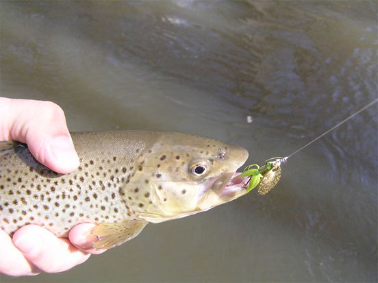 spinning-trout