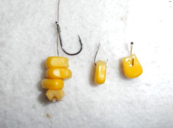 maíz en el anzuelo en el carpfishing