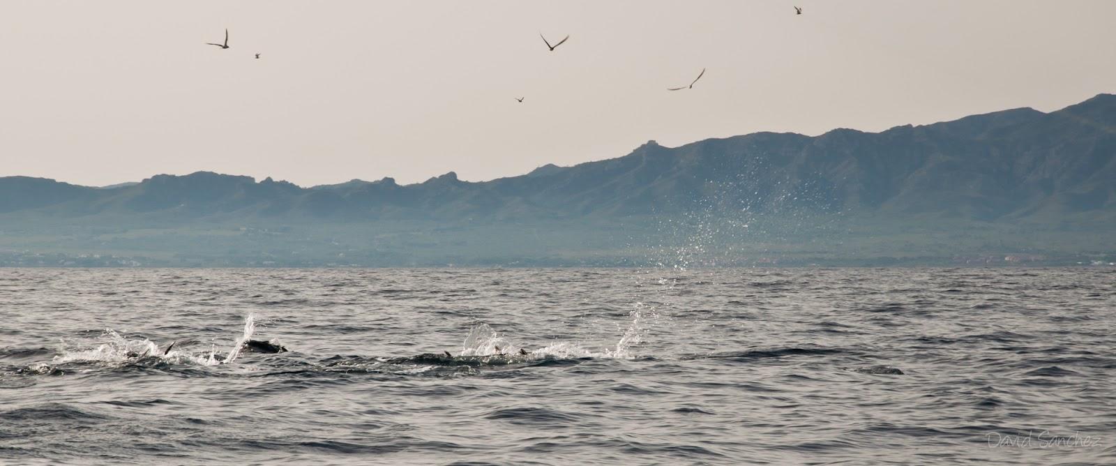 Lances de pesca a spinning