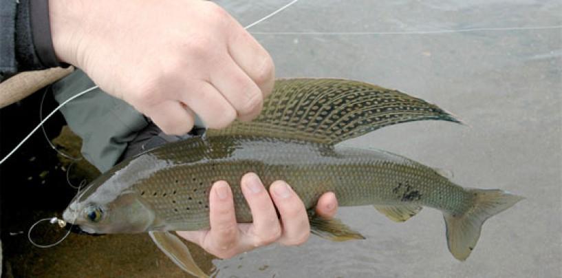 La pesca del tímalo una pasión entre los mosqueros