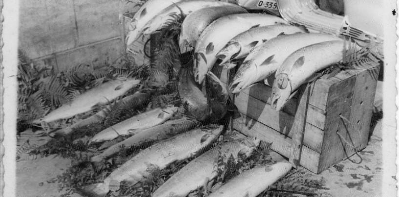 En defensa de la pesca sin muerte del salmón (aunque pese a unos pocos)
