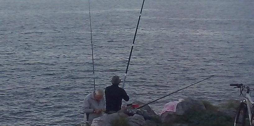 Aspectos a tener en cuenta  en la pesca de sargo con macizado