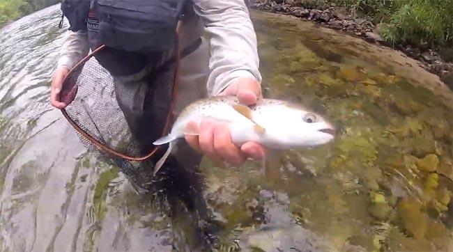 pesca-reos-a-mosca