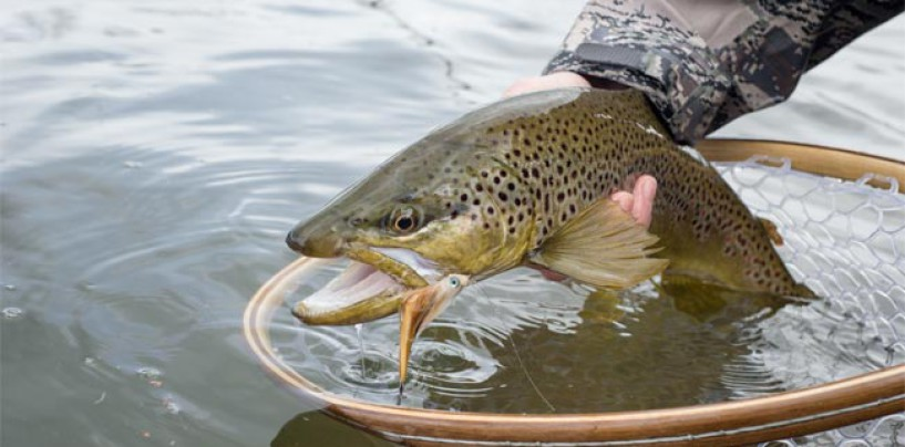 Pesca de truchas con streamers, pasión en embalses y lagos