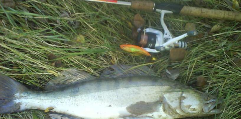 Cuatro señuelos básicos para la pesca de luciopercas en verano