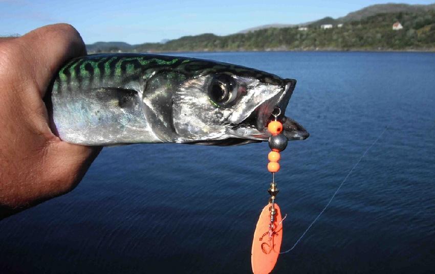 pesca de caballas con cucharillas