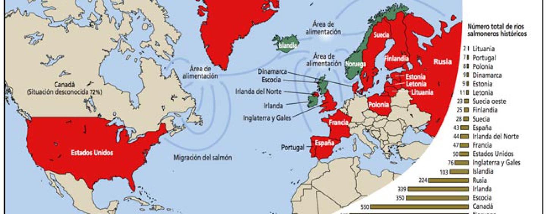 Una introducción a la situación del salmón atlántico en el Mundo