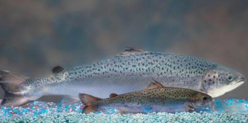 Pezcador al día, principales noticias de pesca (Noviembre 2015, 4)