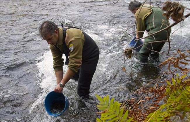 suelta-salmon-lerez