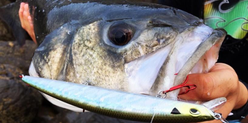 Los 10 mejores señuelos para pescar en invierno