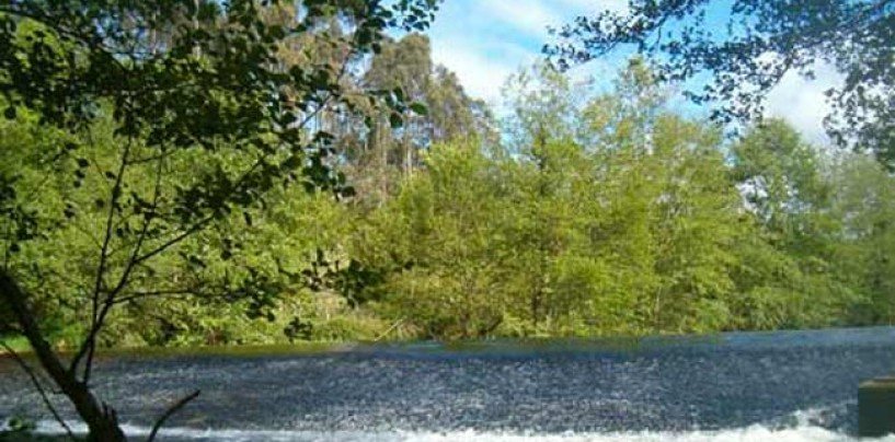 Los ríos salmoneros de España (XII): El salmón en el río Porcia, cualquier tiempo pasado fue mejor