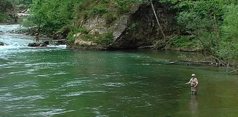 Los ríos salmoneros de España (XVII): El salmón en el río Sella, la mejor población de salmón en España