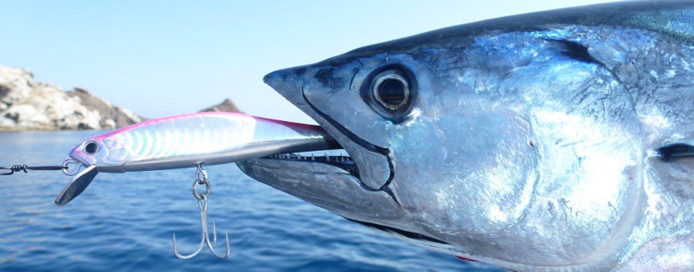 La emoción de la pesca de bonitos a spinning