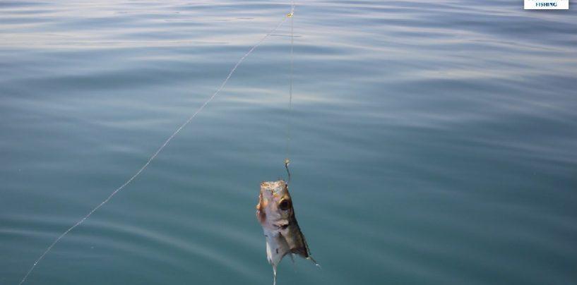 Como montar un aparejo para pescar al vivo y como utilizarlo