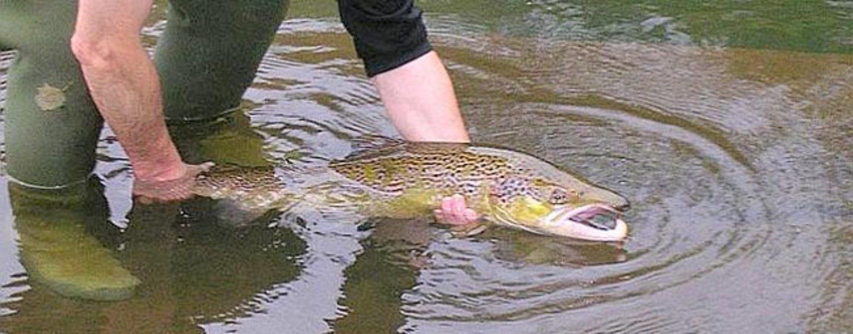 Los ríos salmoneros de España (XXVII): El salmón en el río Oria, una recuperación superando obstáculos
