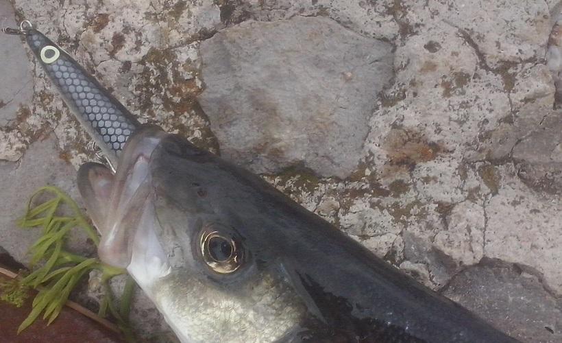 Azuelo elemento muy importante en la pesca