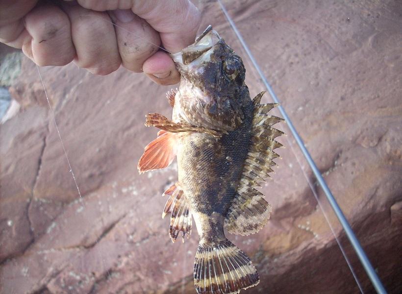 pesca rock fishing ligero