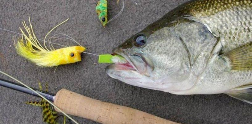 El otoño es también para la pesca del black bass a mosca
