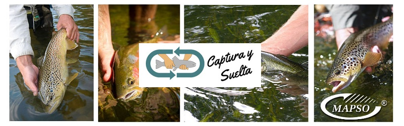 Cucharillas de pesca sin muerte Mapso, calidad hecha en España