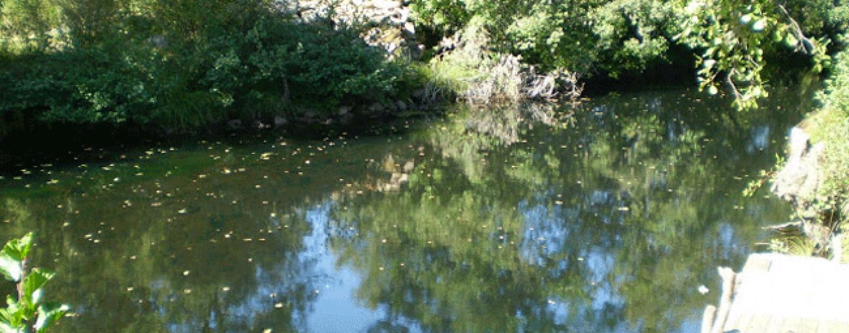 Los mejores ríos trucheros de España (XII): El río Negro