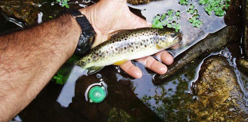 Pesca con buldo en aguas bajas