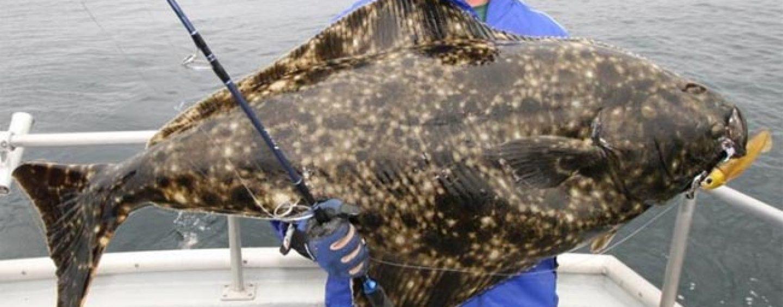 Viajes de pesca: La pesca de halibuts en Alaska (III)
