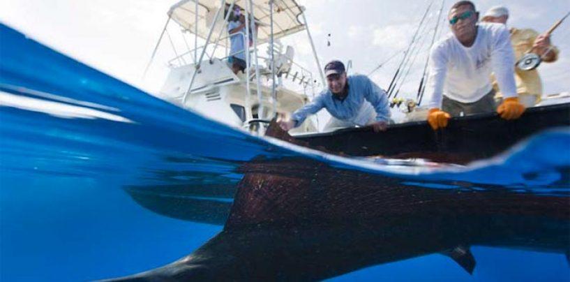 Destinos de pesca, Iztapa (Guatemala), en búsqueda de gigantescos peces vela