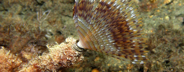 El gusano de plumero: Una carnada tremendamente efectiva y… ¡gratis!