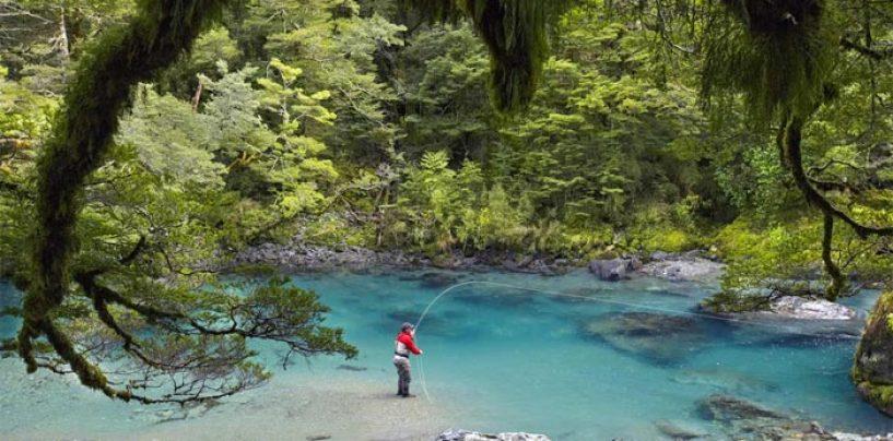 Destinos de pesca – Las enormes truchas comunes, salmones y reos del río Wairau (Nueva Zelanda)