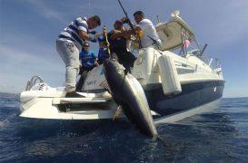 Ciencia, investigación y deporte se aúnan en la Garmin Great Tuna Race