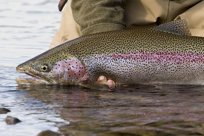 Pesca en Alaska