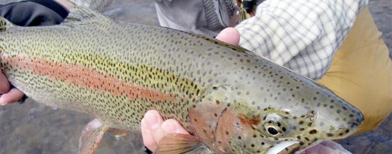 La pesca en Alaska (IV): En busca de las grandes truchas arcoíris de finales de verano