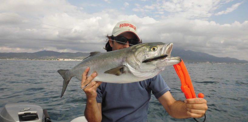 Pesca con stickbait hundido para el mar: cómo, cuándo y dónde