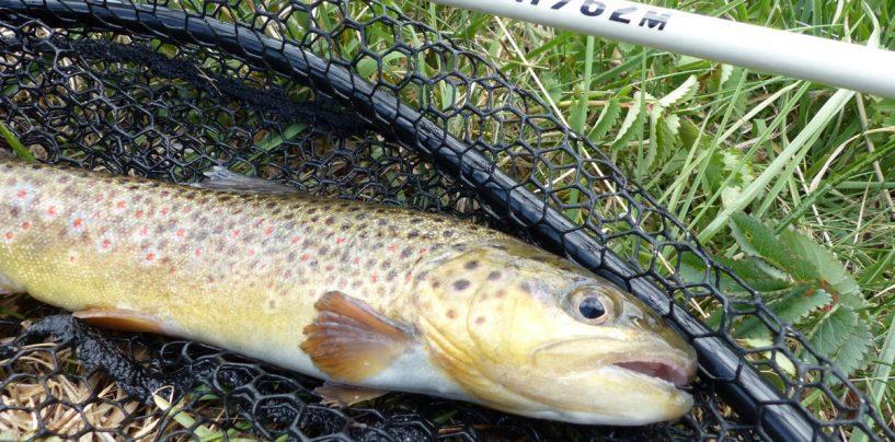 Cómo actuar en la pesca a spinning en ríos de alta montaña